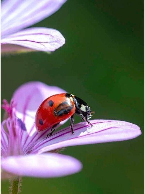 Backyard Biodiversity Native Plants Species