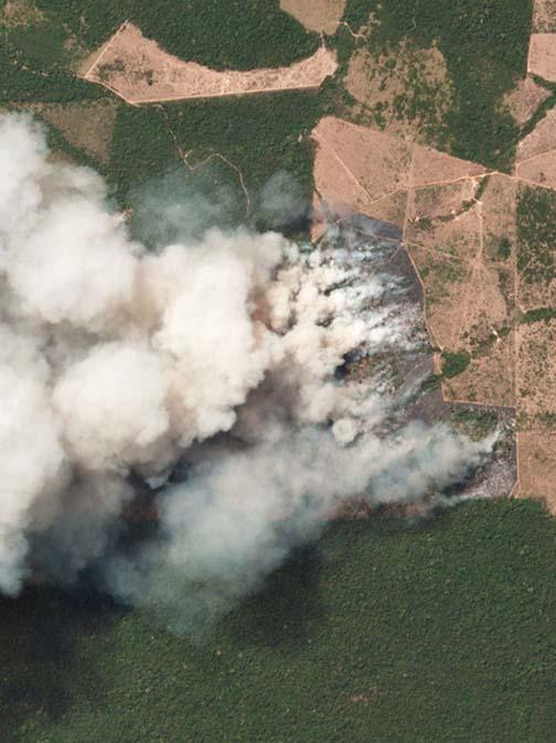 The Amazon is Burning!