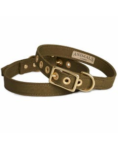 Animals in Charge All Weather Dog Collar - Olive + Brass | Flora & Fauna Australia