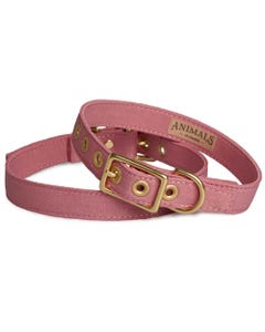 Animals in Charge All Weather Dog Collar - Dusty Pink + Brass | Flora & Fauna Australia