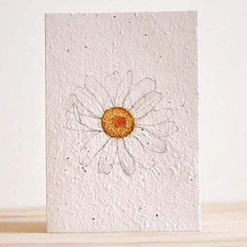 Hello Petal Seeded Card - Daisy Daze Blooming Card