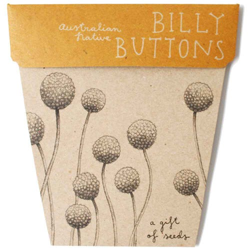 Sow n Sow Gift of Seeds - Billy Buttons