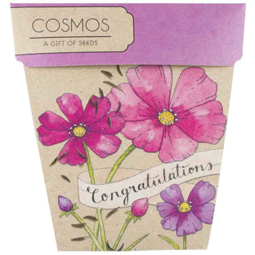 Sow n Sow Gift of Seeds - Congratulations Cosmos