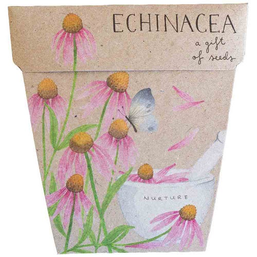 Sow n Sow Gift of Seeds - Echinacea