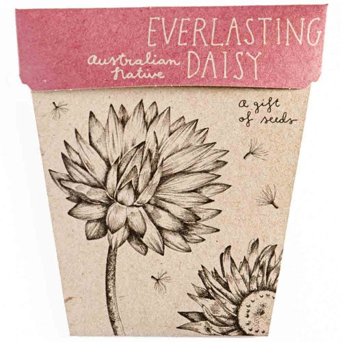 Sow n Sow Gift of Seeds - Everlasting Daisy