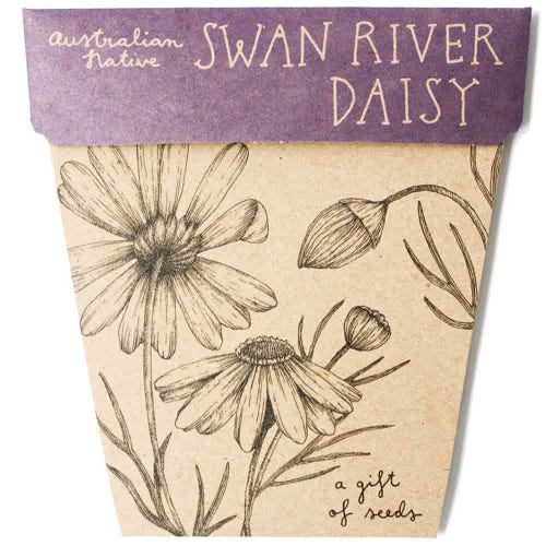 Sow n Sow Gift of Seeds - Swan River Daisy