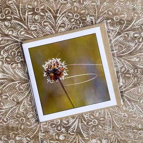 Myrtle & Me Greetings Card - Buttongrass Flower