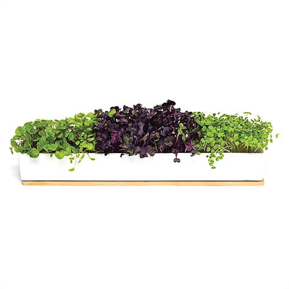 Urban Greens Microgreens Windowsill Grow Kit