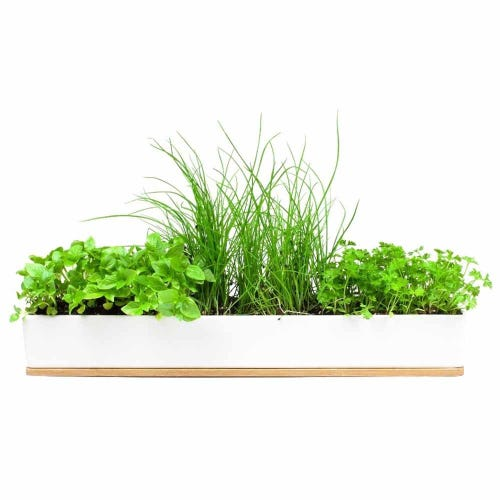 Urban Greens Micro Herbs Windowsill Grow Kit