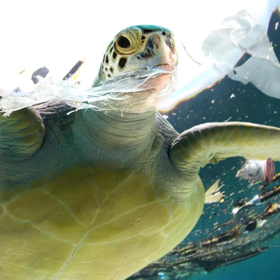 Millions of animals are killed by plastics every year