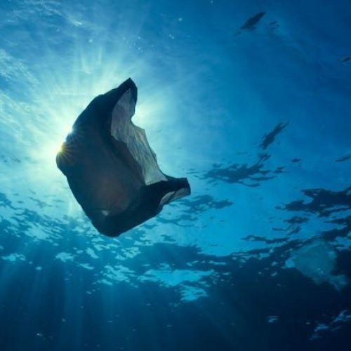 Plastic bags are polluting our oceans