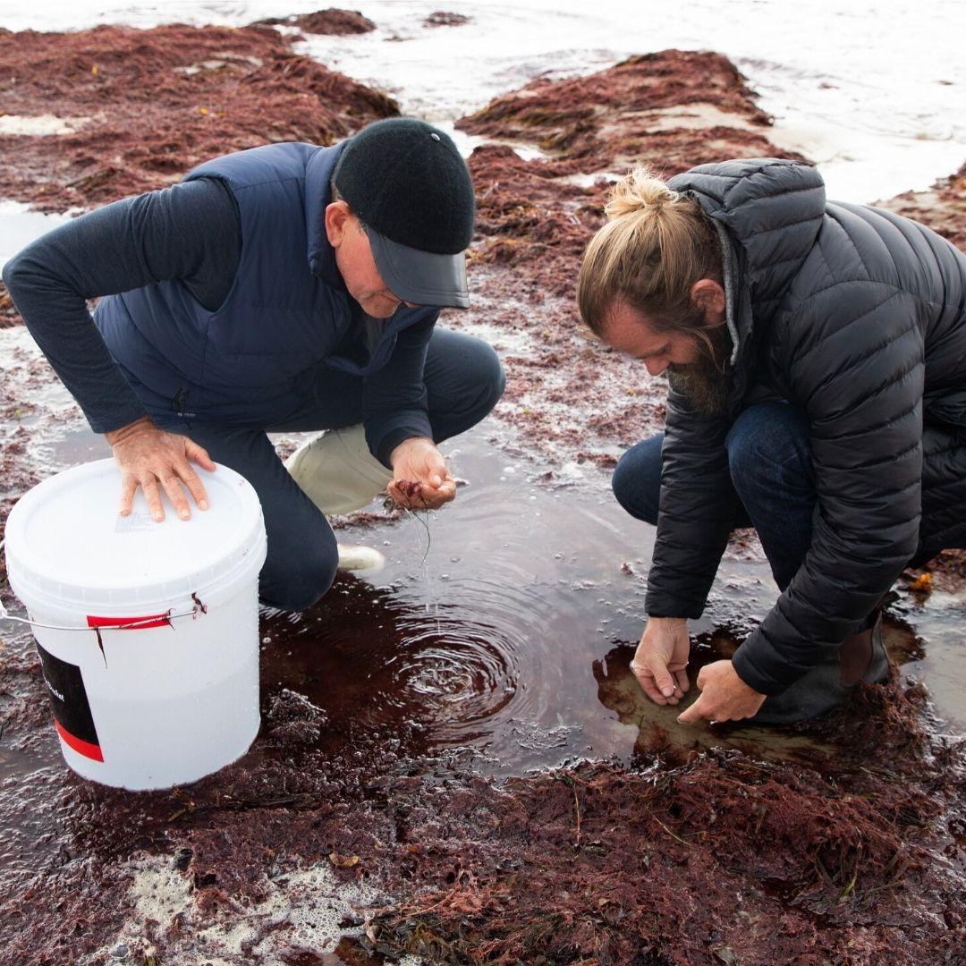 Austalian Museum Spark Seaweed Farm