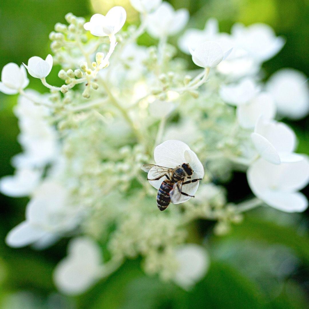 Backyard Biodiversity Bee