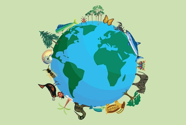 The Importance of Biodiversity Month!