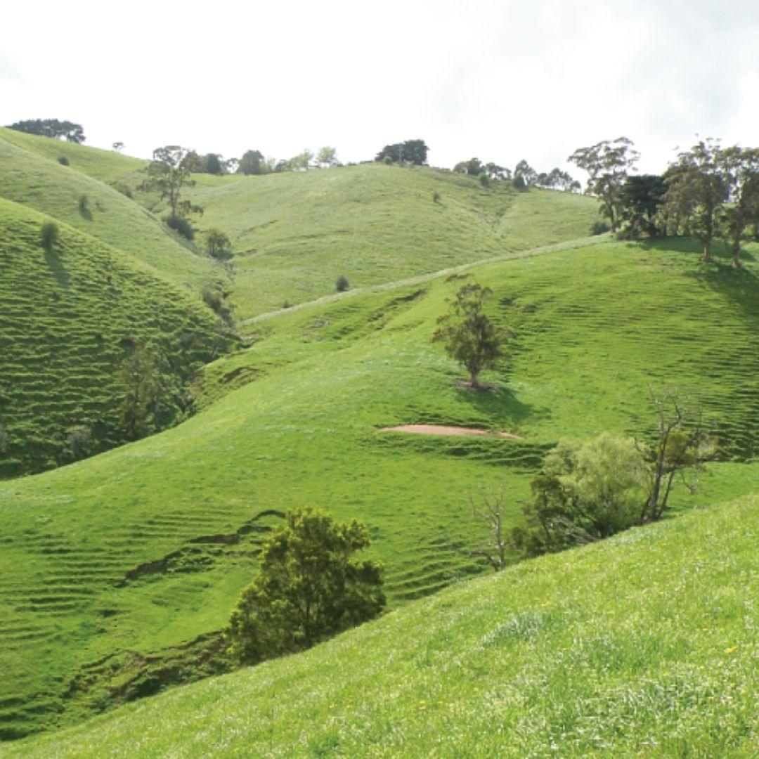 Giant Gippsland Earthworm Greenfleet Deforestation