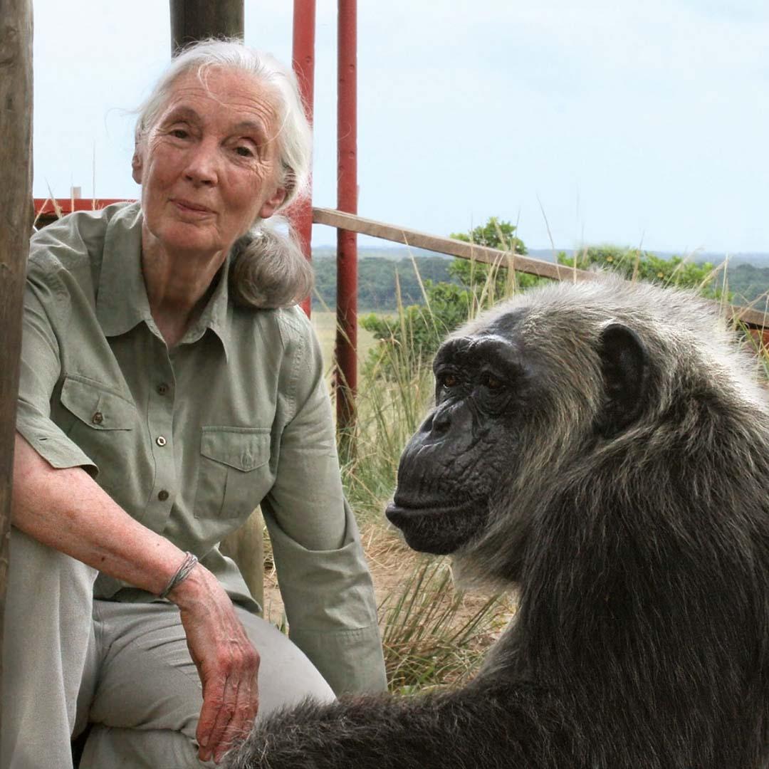 Jane Goodall - Primatologist & Anthropologist