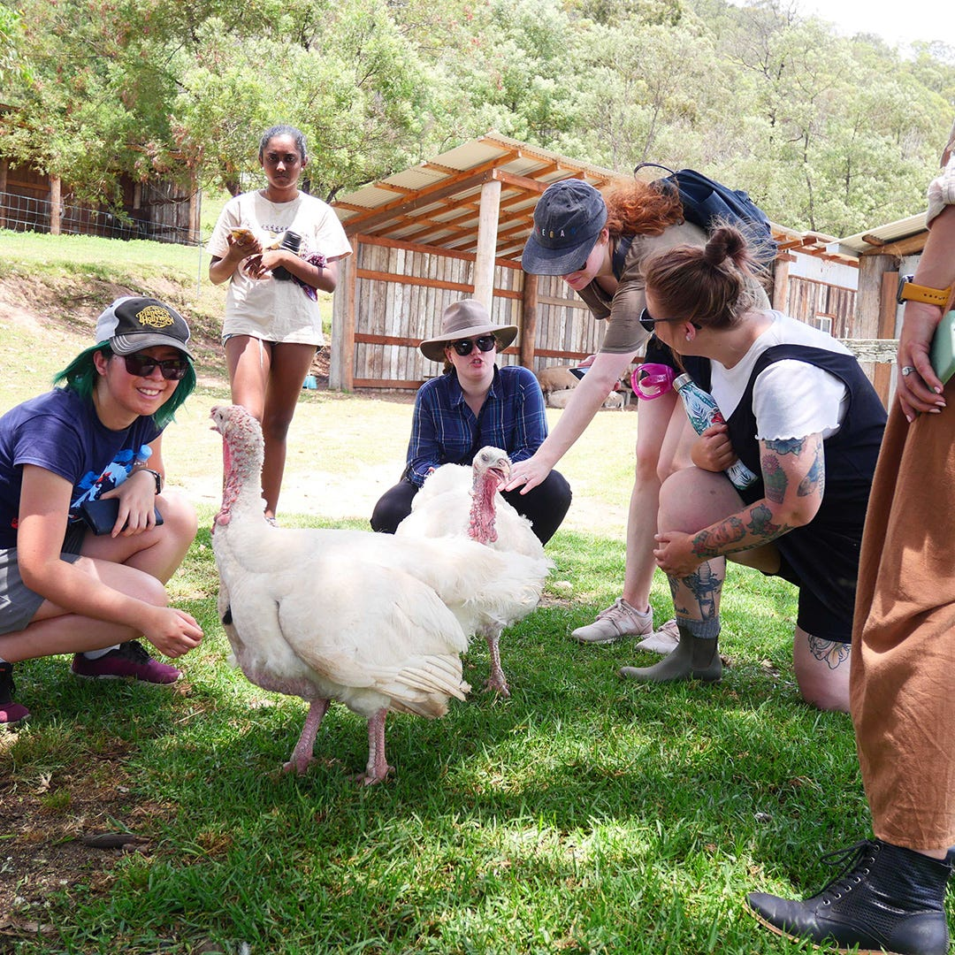 Flora and Fauna team at Where Pigs Fly Sanctuary