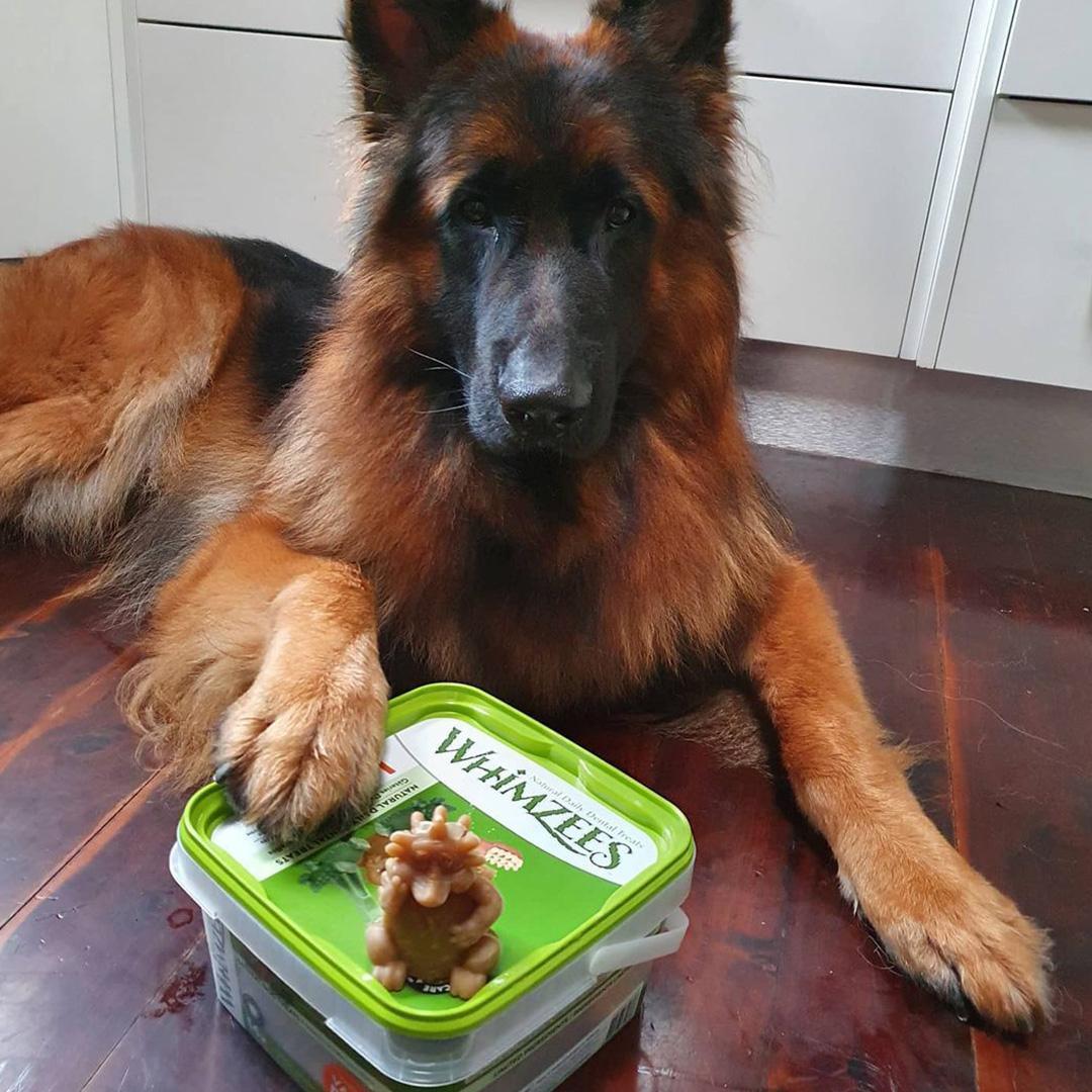 Whimzees Hedgedog Dog Dental Chews - Large