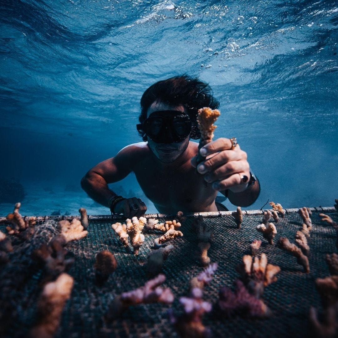 Who are the Coral Gardeners?