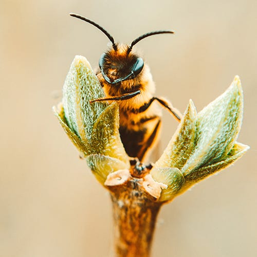 Fun Facts About Bees!