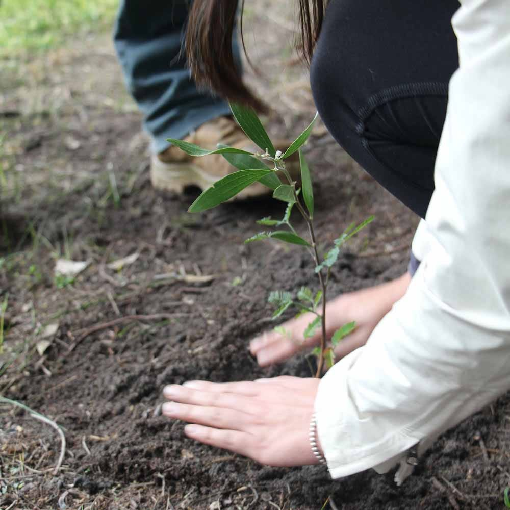 Carbon Offsetting and Helping Our Planet | Flora & Fauna Australia