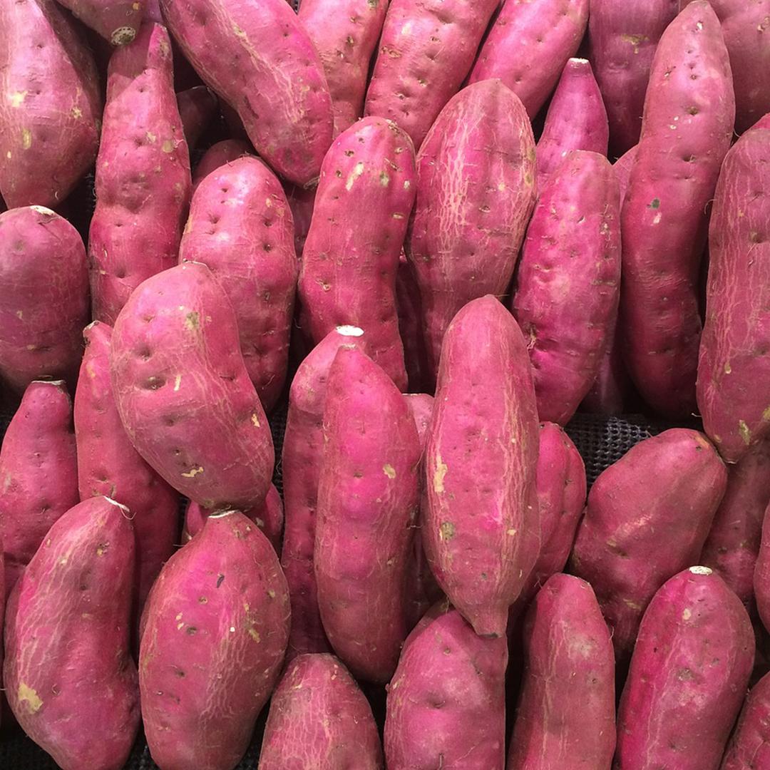 The Hansen sweet potato ™