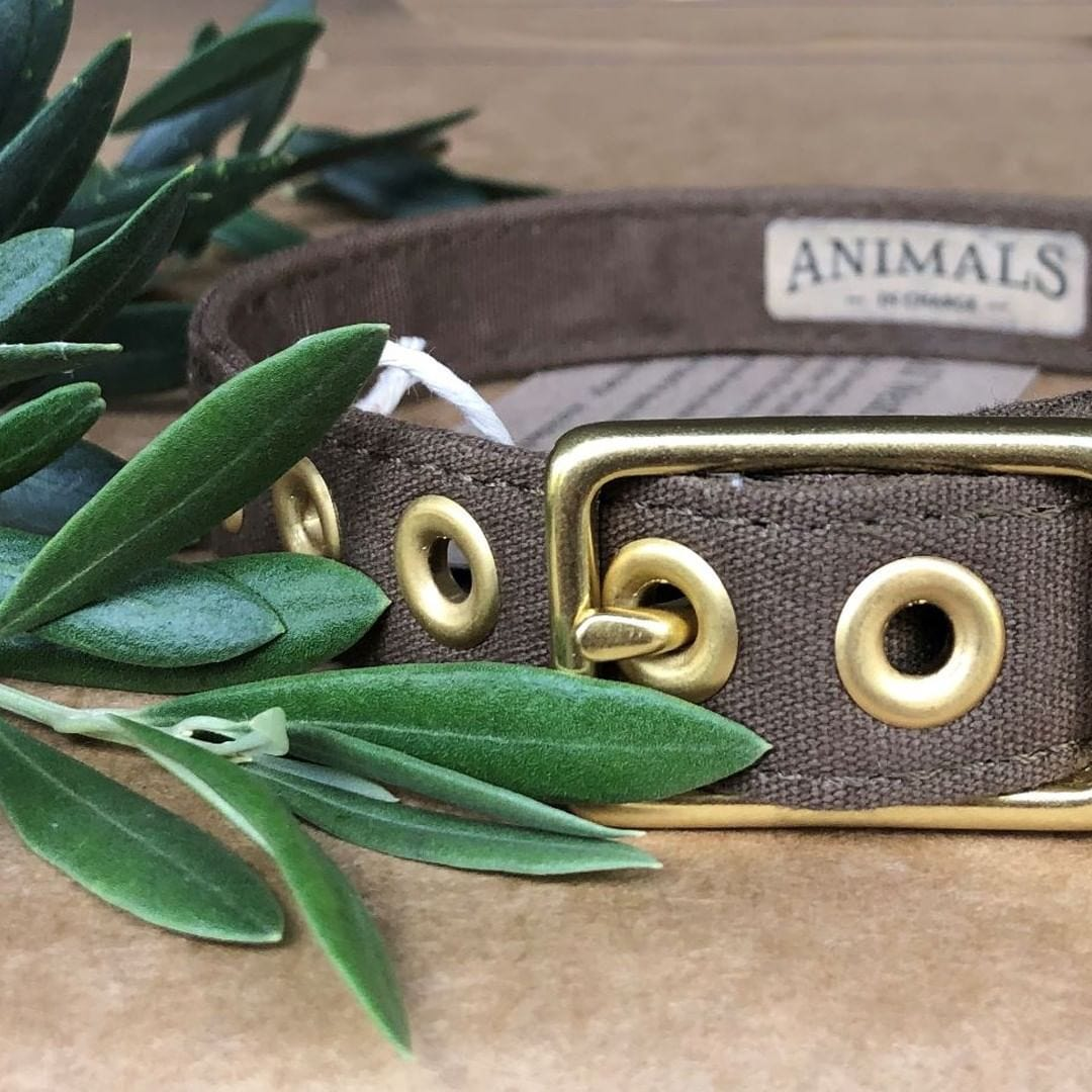 Animals in Charge All Weather Dog Collar - Olive + Brass
